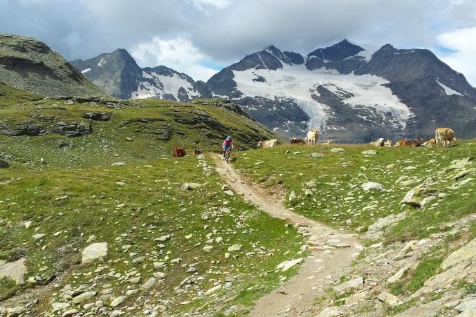 Berg, Bike und Kuh. Was will man mehr?