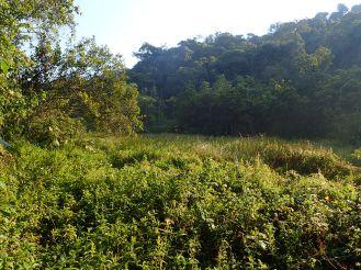 Dieser Sumpf speist die Kandt-Quelle.