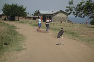 Einen ganz besonderen Grossvater treffe ich in Uganda. Der Marabu ist beim Interview dabei.
