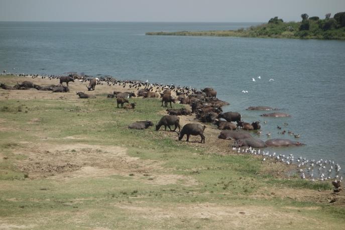 Grosseltern und Enkel der Uganda-Geschichte leben auf Tuchfühlung mit wilden Tieren.